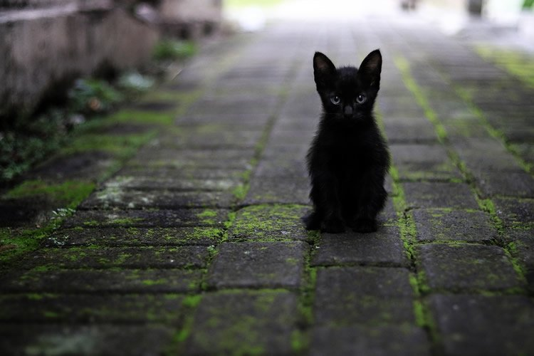 What is ignorance and superstition - ways to deal with superstition